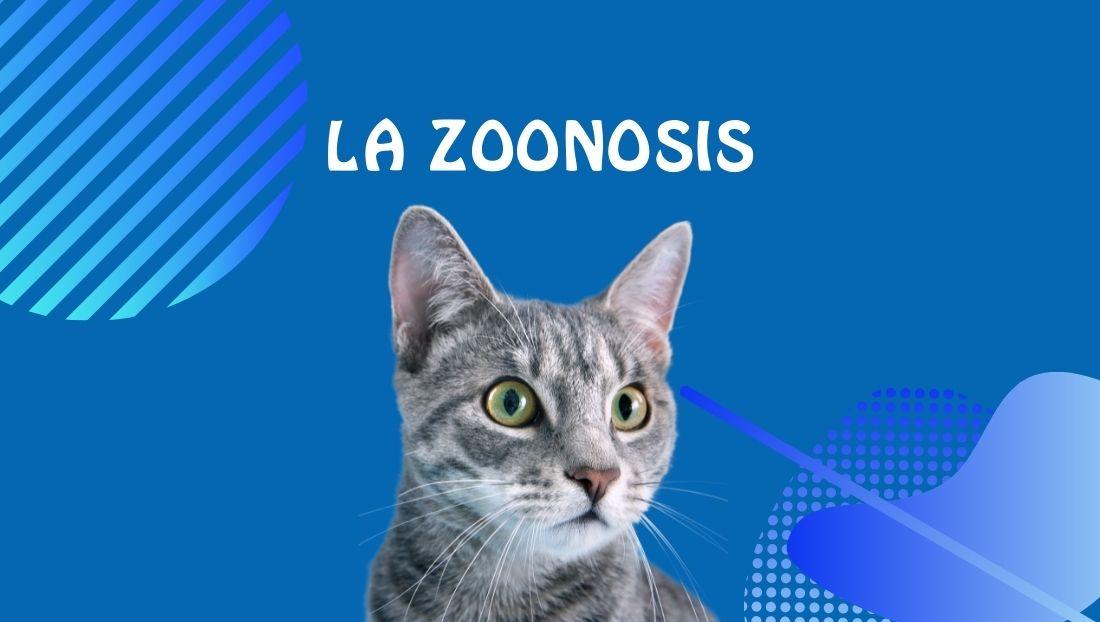 Zoonosis en gatos-ANIMANSION
